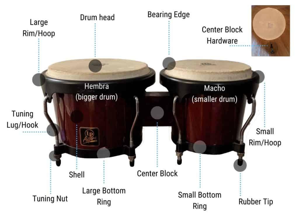 bongo-drum-diagram-anatomy